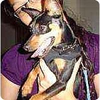 Adopt A Pet :: Bandit - Florissant, MO