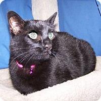 Adopt A Pet :: SueSue - Colorado Springs, CO
