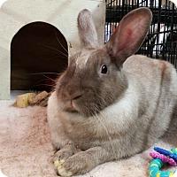 Adopt A Pet :: Paris - Williston, FL