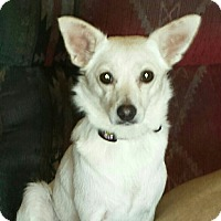 Adopt A Pet :: Perla - Kirkland, WA