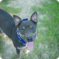 Hound (Unknown Type) Mix Dog for adoption in Tarboro, North Carolina - Han