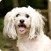 Adopt A Pet :: Ashes - Cincinnati, OH
