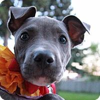 Adopt A Pet :: Violet-Adopted! - Detroit, MI