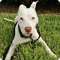 Adopt A Pet :: TAKA - West Palm Beach, FL