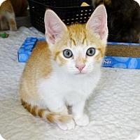 Adopt A Pet :: Gibson - Belleville, MI