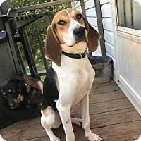Adopt A Pet :: Cindy Lou - Ball Ground, GA