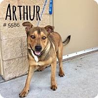 Adopt A Pet :: Arthur - Alvin, TX