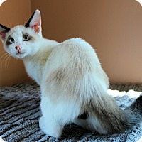 Adopt A Pet :: Aiden - Morganton, NC
