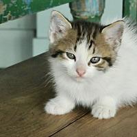 Adopt A Pet :: Leroy - San Antonio, TX