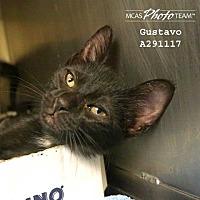 Adopt A Pet :: GUSTAVO - Conroe, TX