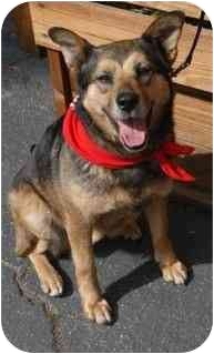 Shepherd (Unknown Type) Mix Dog for adoption in Los Angeles, California - Satine