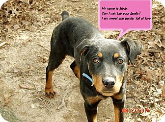 Rottweiler Mix Puppy for adoption in Franklinton, North Carolina - Mixie