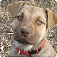 Adopt A Pet :: GYPSY - Plainfield, CT
