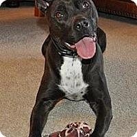 Adopt A Pet :: Gemma - Chicago, IL