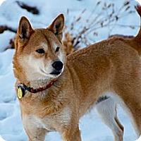 Adopt A Pet :: Mika - Centennial, CO