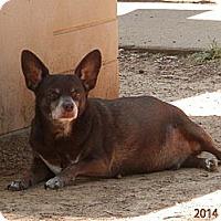Adopt A Pet :: Boe-Senior - Clarksville, TN