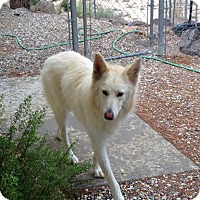 Adopt A Pet :: Pearl - Lucerne Valley, CA
