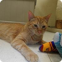 Adopt A Pet :: Hawkeye - Milwaukee, WI