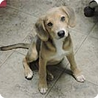 Adopt A Pet :: Piper - Cottonport, LA