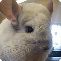 Adopt A Pet :: Gary - Patchogue, NY