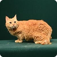 Adopt A Pet :: Riley - Cary, NC