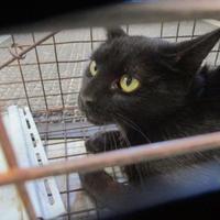 Adopt A Pet :: 36177949 - Greenville, NC