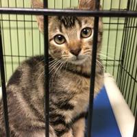 Adopt A Pet :: Jigsaw - Savannah, TN