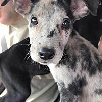 Adopt A Pet :: Levi - Trenton, NJ