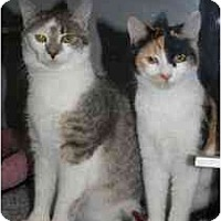 Adopt A Pet :: Jill - Marietta, GA