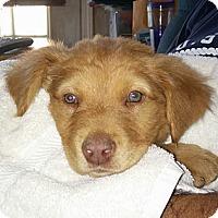 Adopt A Pet :: Davey - Golden Valley, AZ