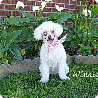 Adopt A Pet :: Winnie - Rancho Palos Verdes, CA