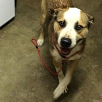 Adopt A Pet :: Burdock - Lewisburg, TN