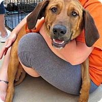 Adopt A Pet :: Ernie - McKinney, TX
