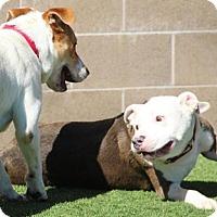 Adopt A Pet :: Frank - Grass Valley, CA