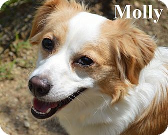 Mixed Breed (Small) Mix Dog for adoption in Fryeburg, Maine - Molly
