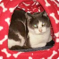 Adopt A Pet :: Patches - Courtesy Post - Boston, MA