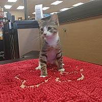 Adopt A Pet :: JC - Turnersville, NJ