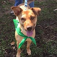 Adopt A Pet :: Natalie Wood - Northville, MI