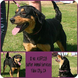 Rottweiler Mix Dog for adoption in Yuba City, California - 10/10 Madi