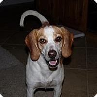 Adopt A Pet :: Crackers - Phoenix, AZ