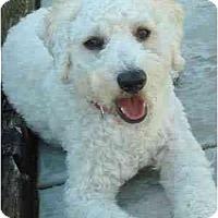 Adopt A Pet :: Cooper - La Costa, CA