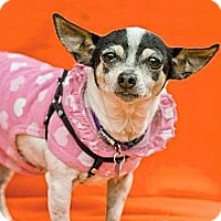 Adopt A Pet :: Tansie - North Hollywood, CA