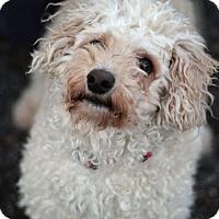 Adopt A Pet :: Lilly - Tinton Falls, NJ