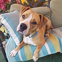 Adopt A Pet :: Wesley - Toluca Lake, CA