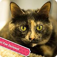 Adopt A Pet :: Chica - Carroll, IA