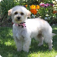 Adopt A Pet :: SYLVIE - Newport Beach, CA