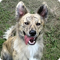 Adopt A Pet :: BIJOU - Carrollton, TX