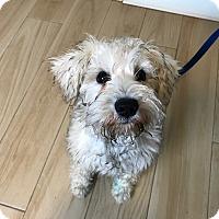 Adopt A Pet :: Tori - Redondo Beach, CA