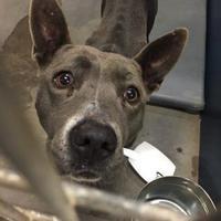 Adopt A Pet :: ZOLA - White Settlement, TX