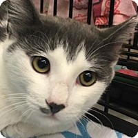 Adopt A Pet :: Husky - Oakley, CA